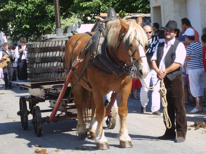 cheval-de-trait-à-Fourques